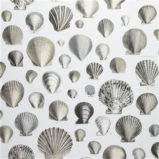 Designers Guild Captain Thomas Browns Shells Pearl