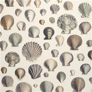 Designers Guild Captain Thomas Browns Shells Oyster