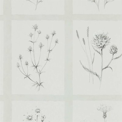 Sanderson Little Thistles Pewter 216512